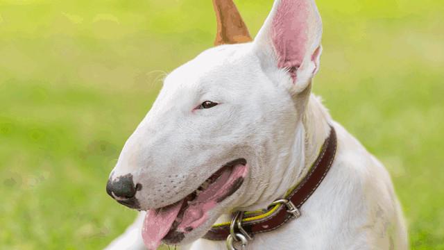 Kadını şiddeti durduran köpek kahraman ilan edildi