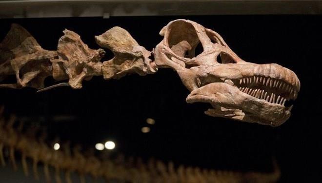 Tam 98 milyon yıllık dünyanın en büyük fosili bulundu - Resim: 4