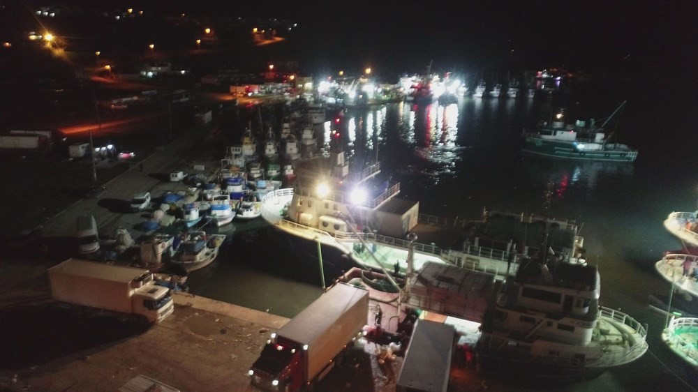 Balıkçılar hamsi avının serbest olduğu İğneada'ya akın etti, hamsi fiyatları düştü - Resim: 1