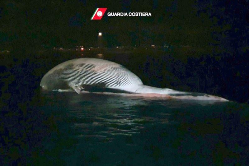 Tam 70 ton ağırlığında... Kıyıya vurdu!  - Resim: 4