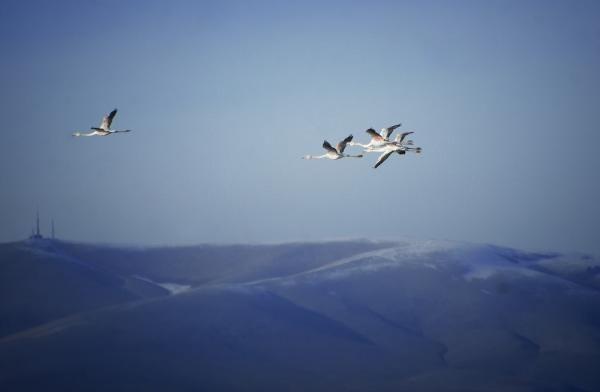 Flamingolar, kış ayında da kurumaya yüz tutan gölde - Resim: 2