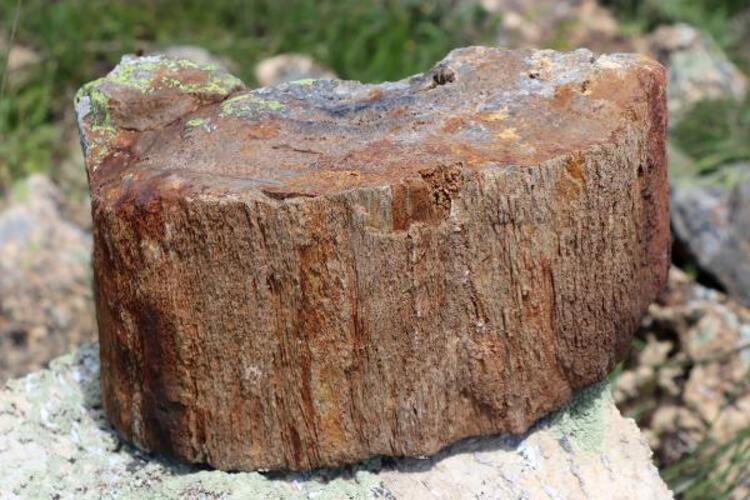 Gümüşhane'de heyecan yaratan keşif! 160 milyon yıl öncesine ait... - Resim: 2