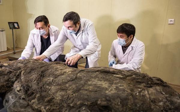 40 bin yıldır buzulda korunan fosil keşfedildi