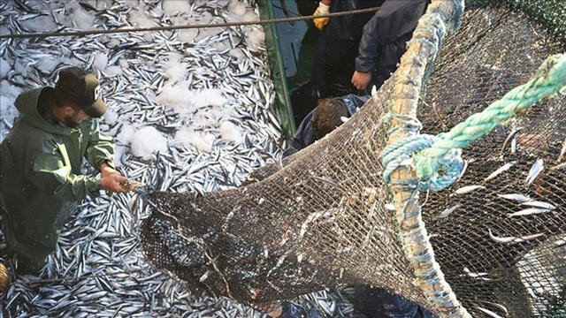 Ege Bölgesi'nden 741 milyon dolarlık balık ihracatı!