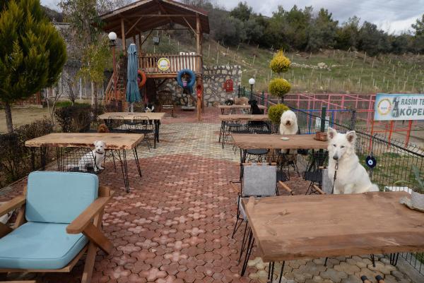 Bu kafeye sadece köpekler girebilir