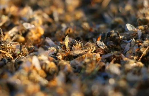 Türkiye'de binlerce arı telef oldu