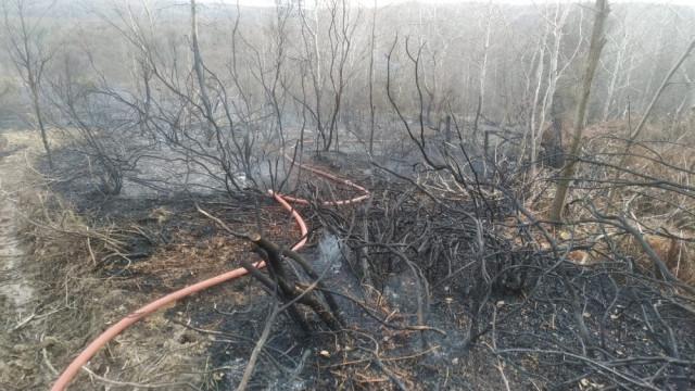 İstanbul Beykoz'da orman yangını