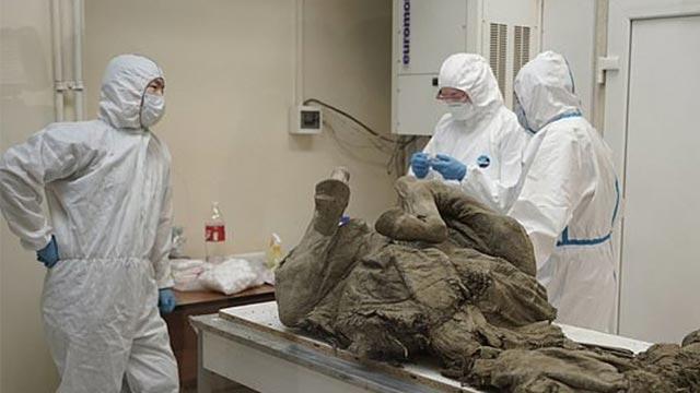 Bilim insanları tarih öncesi virüsleri tespit etmek için fosilleri inceledi