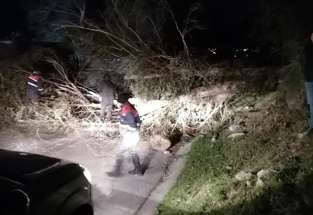İzmir'i fırtına vurdu, ağaçlar devrildi