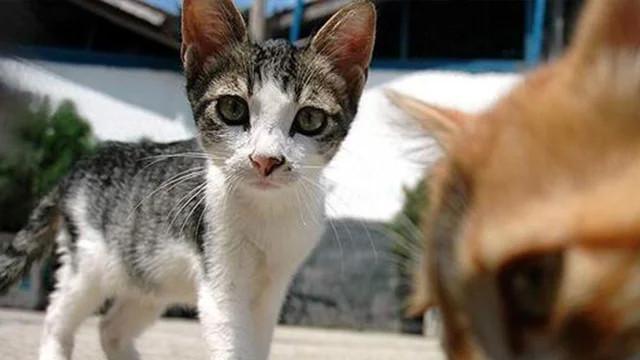 Kedi ve köpeklerin kimliklendirilmesi zorunlu olacak