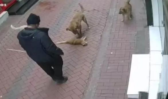 Bu insan olamaz! Köpeklerine 20 kediyi boğdurttu