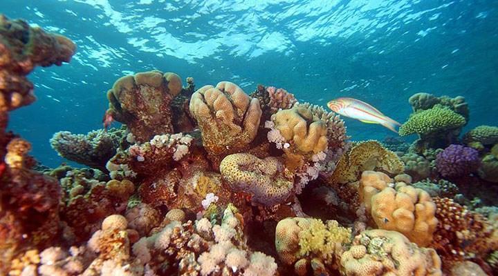 Akdeniz ölüyor! WWF'den korkutan rapor