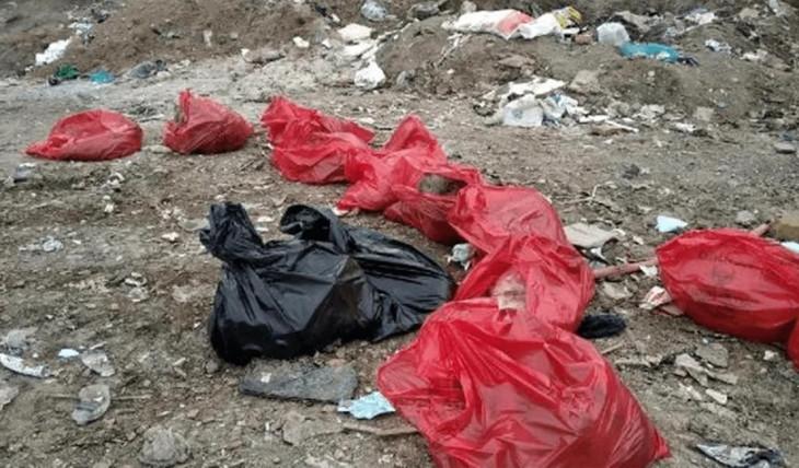 Ankara'da vahşet! 20 köpek cansız olarak bulundu