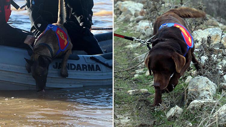 Türkiye'de bir ilk! Sudaki cansız bedeni köpekler buldu