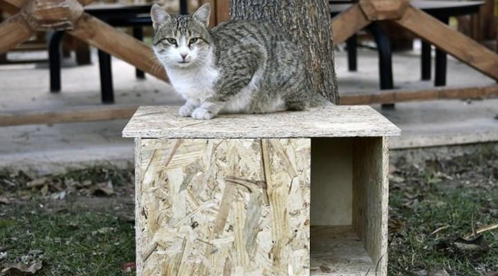 AK Partili belediyeden 'kedi kulübesini kaldırın' tebligatı