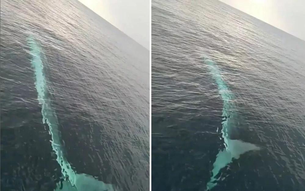 Akdeniz'de balıkçıların balina heyecanı