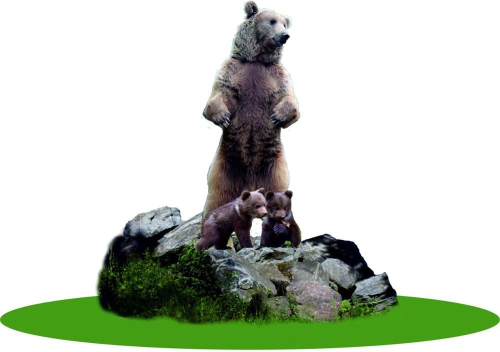 Bolu'da tartışma yaratan ''ayı'' heykeli - Resim: 4