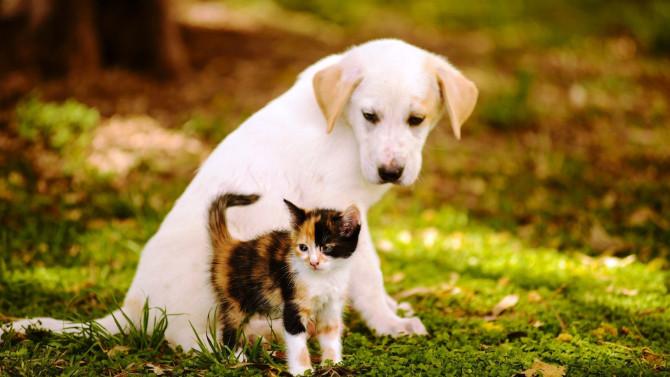 Evcil hayvan sahipleri dikkat! Pasaport ve mikroçip zorunlu oldu