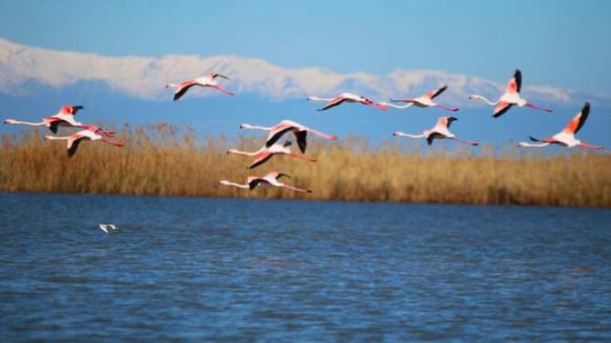 Adana'da flamingoların gökyüzü dansı böyle görüntülendi