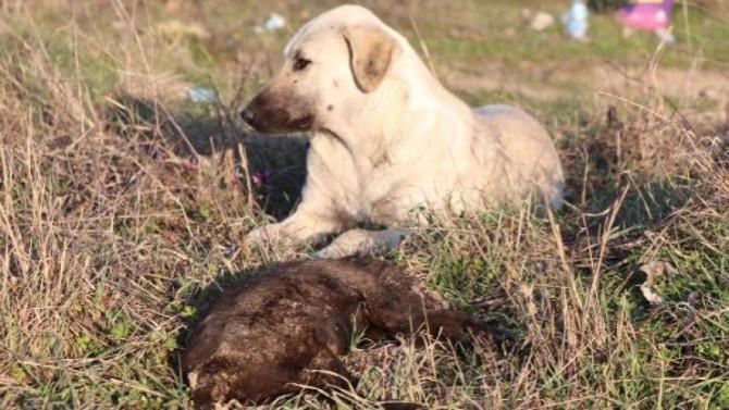 8 yavru köpeği yakarak katlettiler!