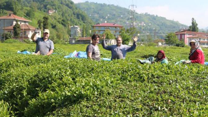 Karadeniz'e ''çay göçü'' öncesi kritik uyarı