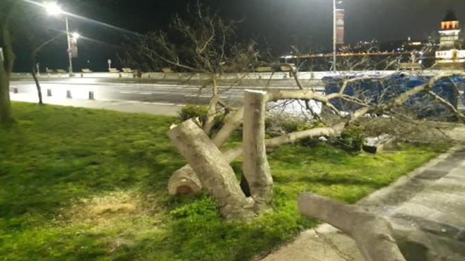 Kız Kulesi'nin karşısındaki ağaçları keserken yakalandılar