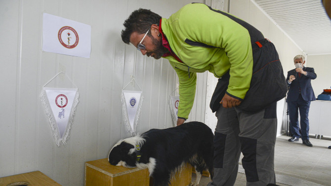Koronavirüsü teşhis eden köpek yetiştirildi