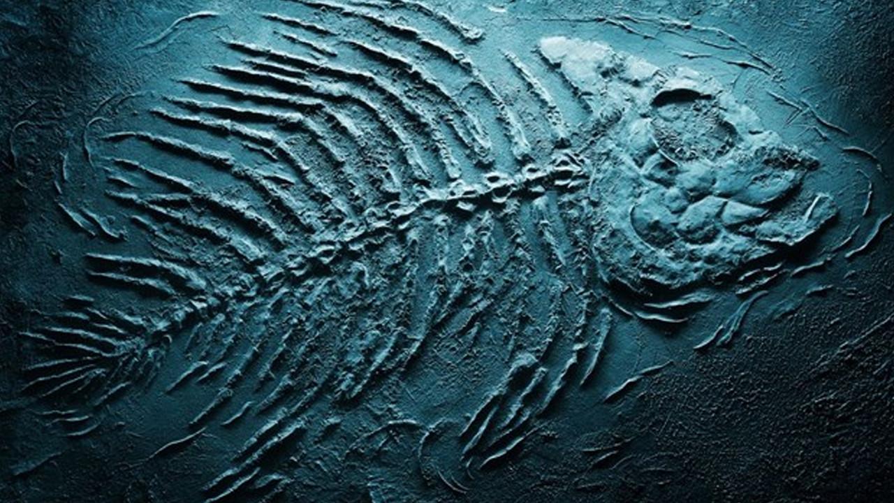 93 milyon yıllık köpek balığı fosili keşfedildi