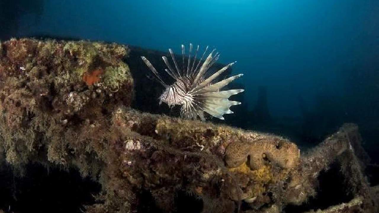 Akdeniz'de korkutan ''sürü'' böyle görüntülendi