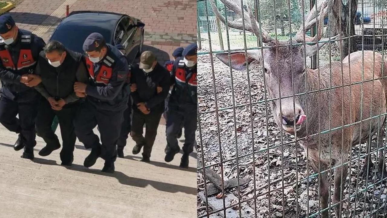 Hayvanat bahçesinden çaldığı geyiği öldürmüştü! Cezası belli oldu
