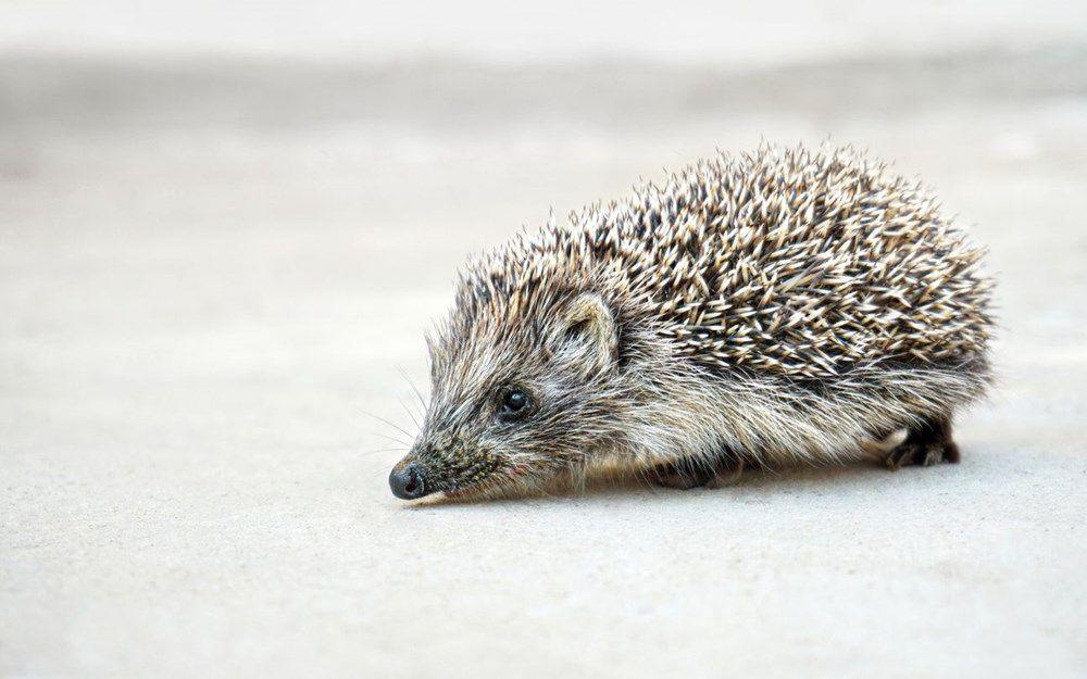 Pandemiye neden olma ihtimali en yüksek 10 hayvan açıklandı - Resim: 3
