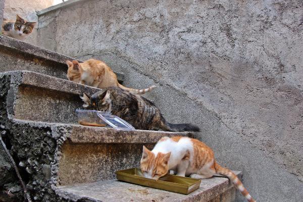 Pandemide evcil hayvan sahiplenme oranı arttı - Resim: 4