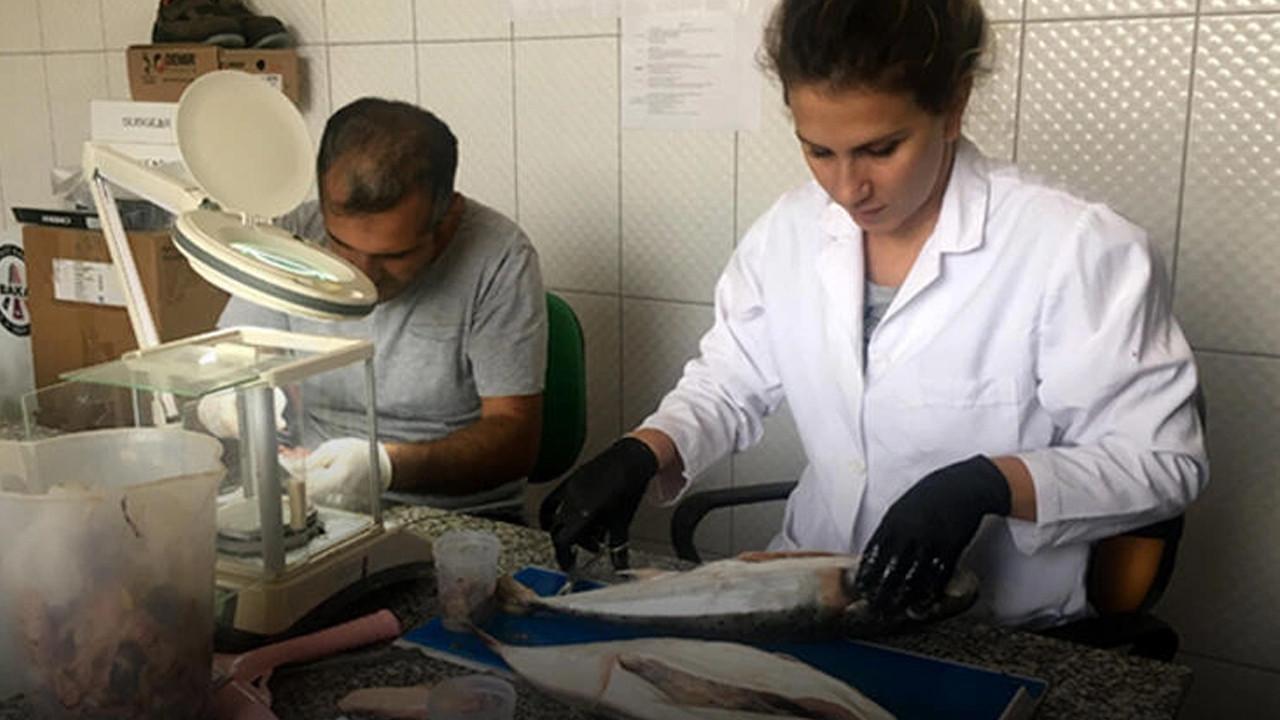 Balon balıklarıyla ilgili korkutan tespit