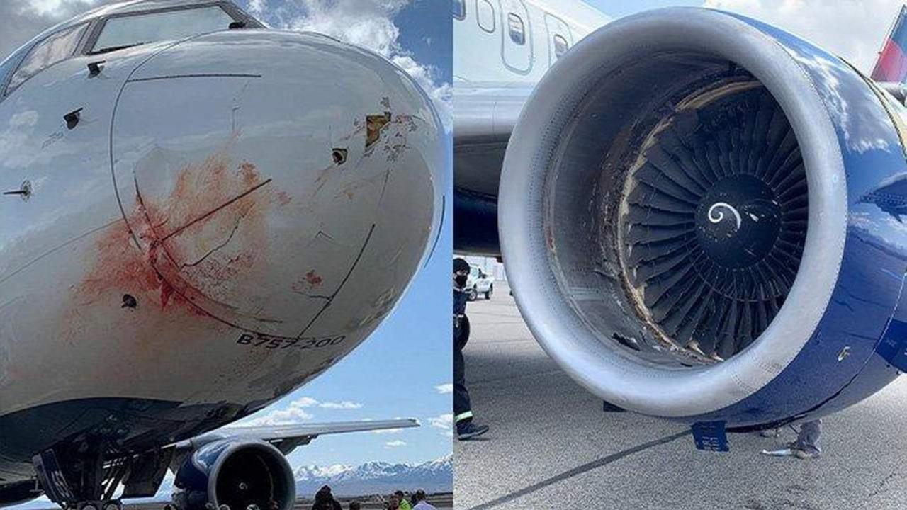 Yolcu uçağında ''kuş sürüsü'' kazası! Kanlar içinde kaldı