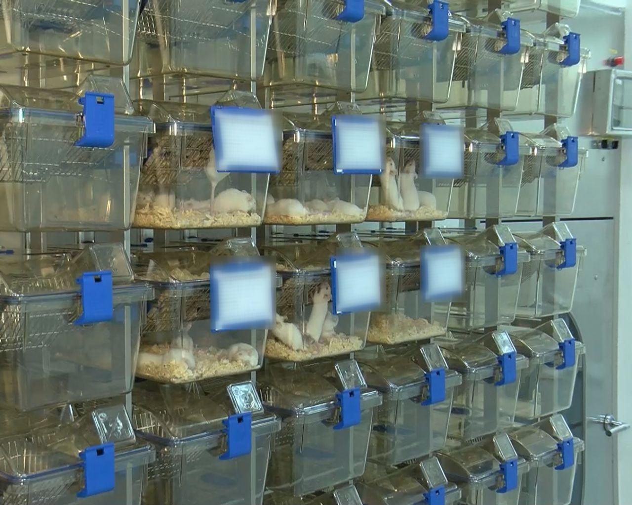 Yerli aşı da mutant virüs testi başlıyor - Resim: 3
