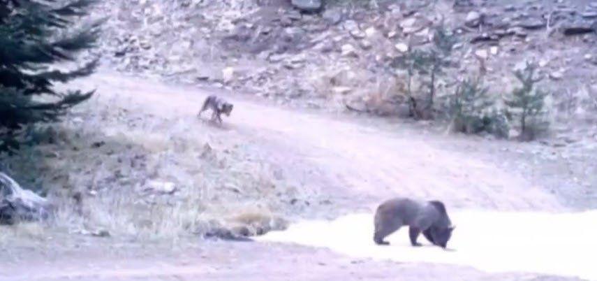 Vahşi doğada ölümcül karşılaşma - Resim: 2