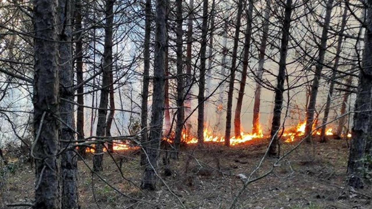 Tekirdağ'da 5 noktada orman yangını