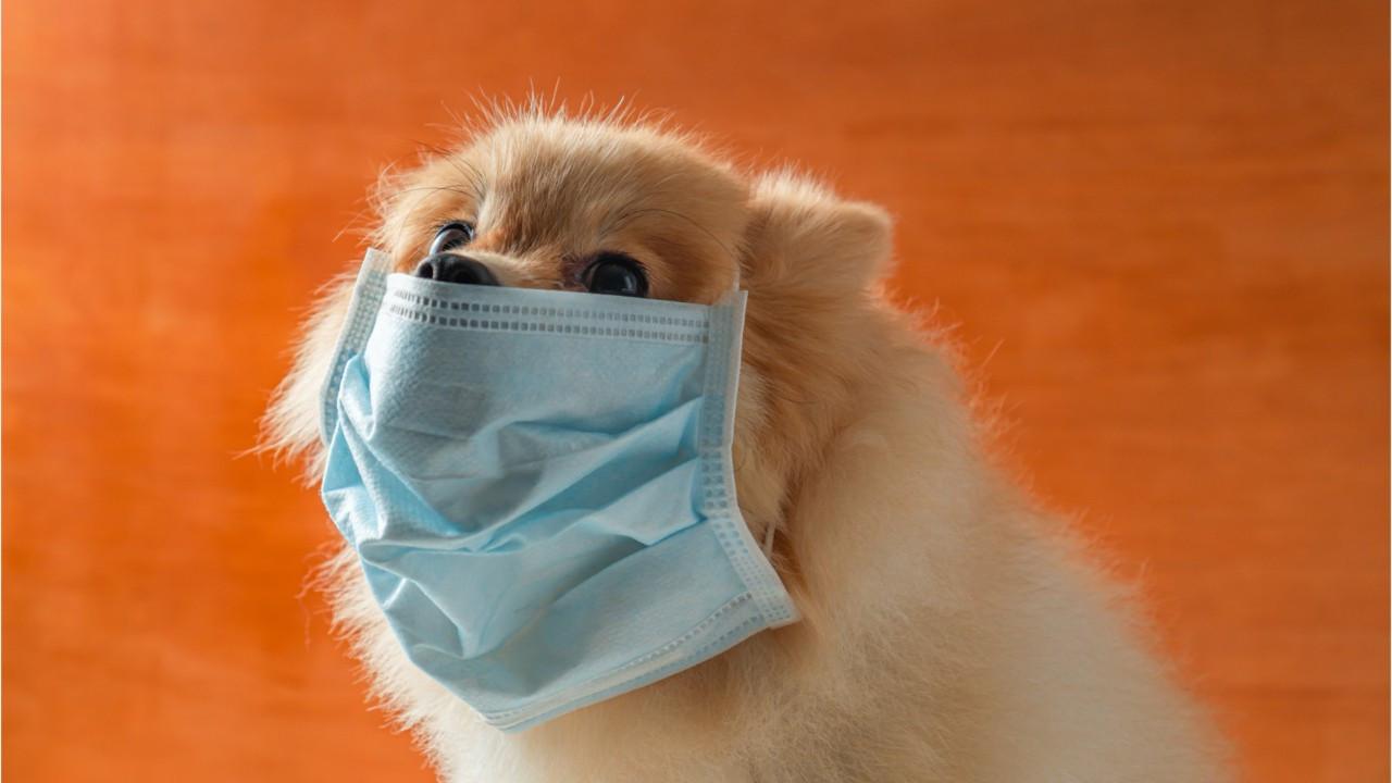 Koronavirüs geçirenlere ''evcil hayvan'' uyarısı: ''Uzak durun''