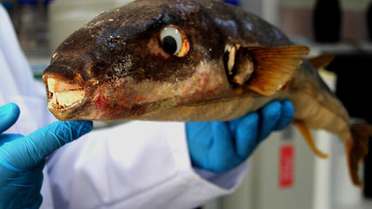 Akdeniz'de ilk kez rastlandı! Birçok balık türü tehlikede