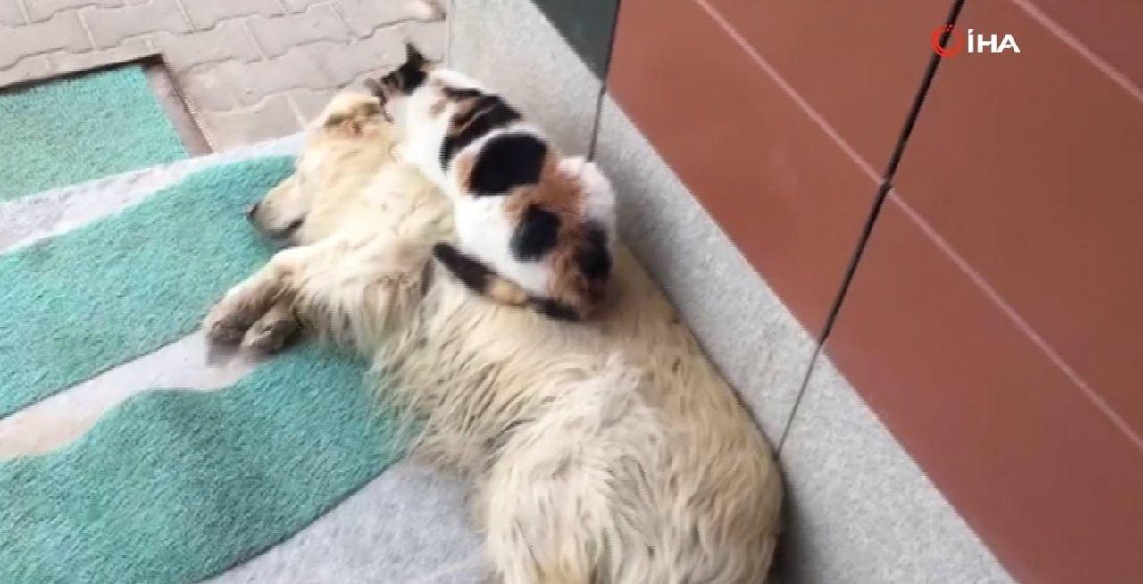 Kedi ile köpeğin kıskandıran dostluğu - Resim: 1