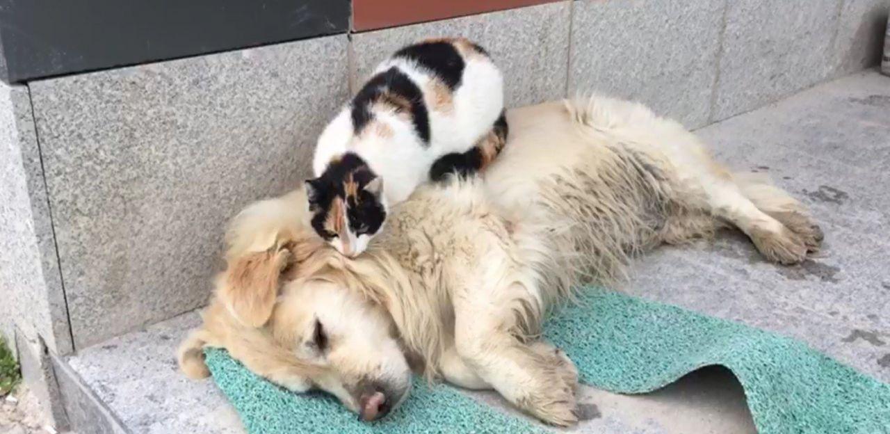 Kedi ile köpeğin kıskandıran dostluğu - Resim: 4