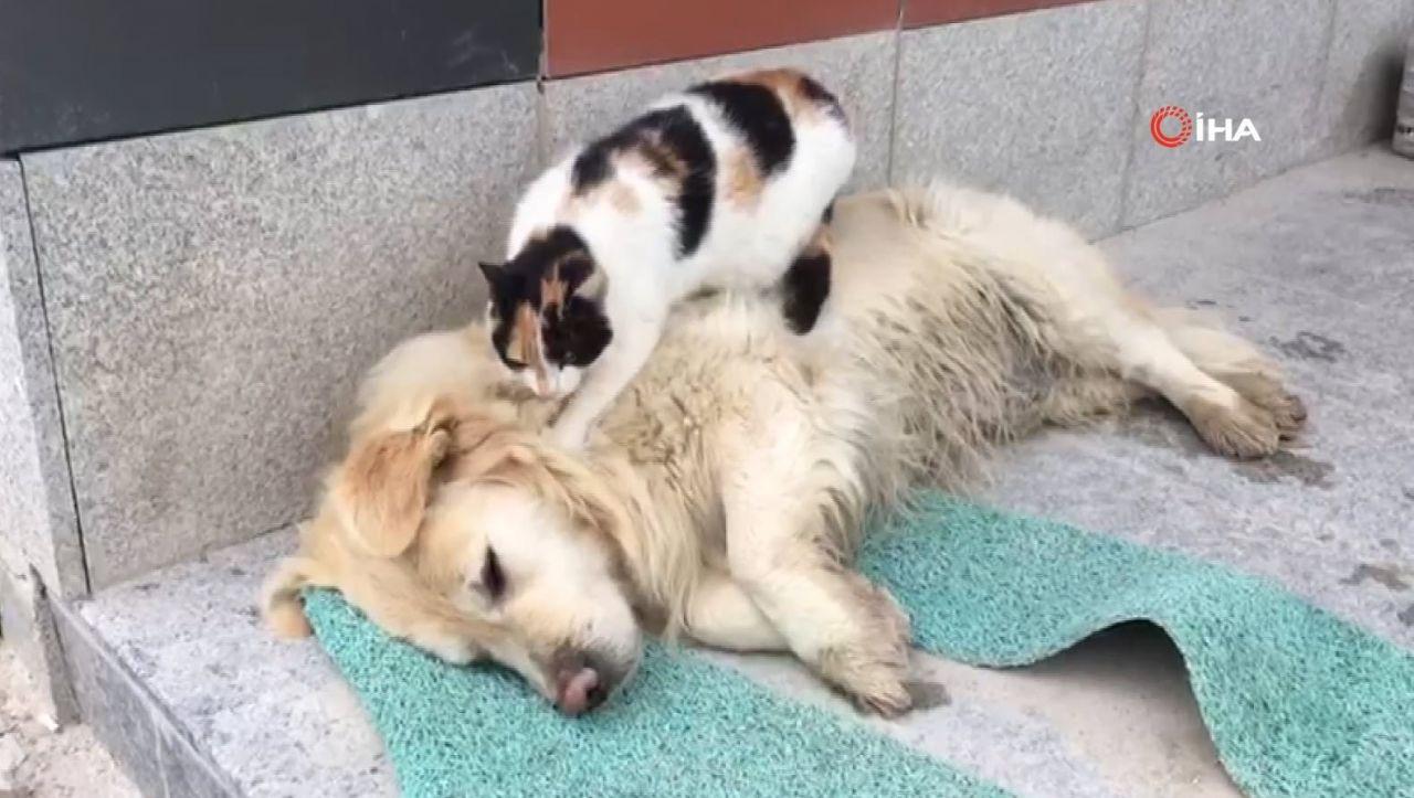Kedi ile köpeğin kıskandıran dostluğu - Resim: 2