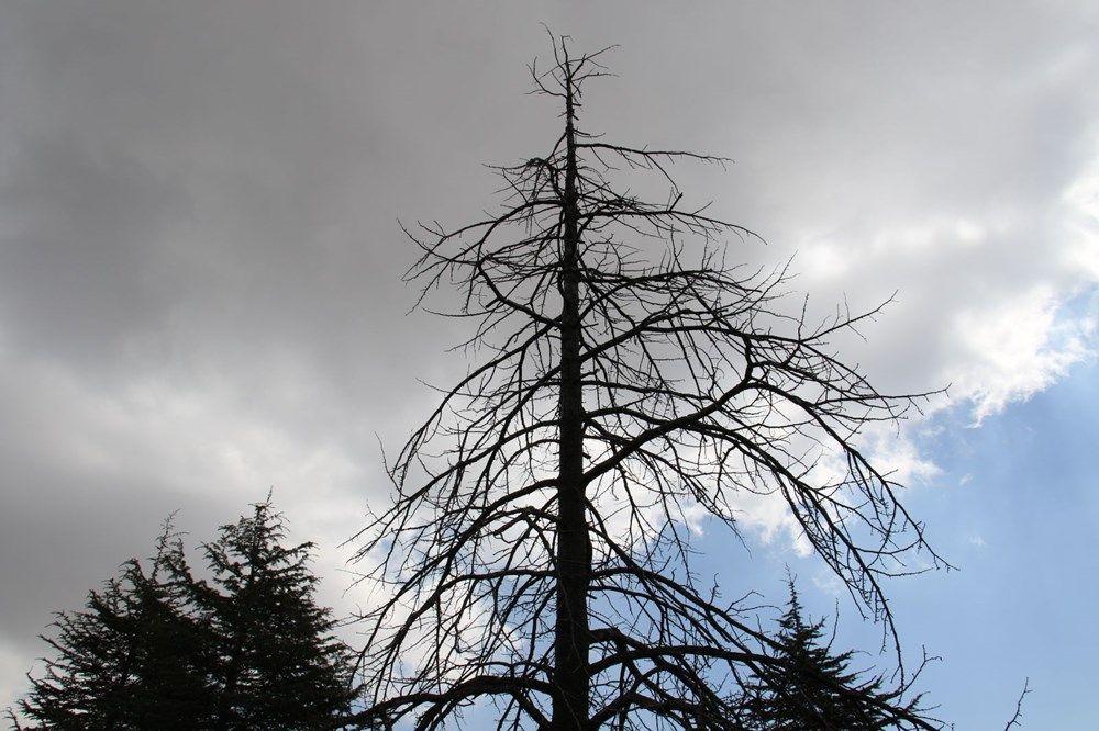 Kuzey Amerika kökenli istilacı böcek, Doğa Anadolu'da görüldü - Resim: 3