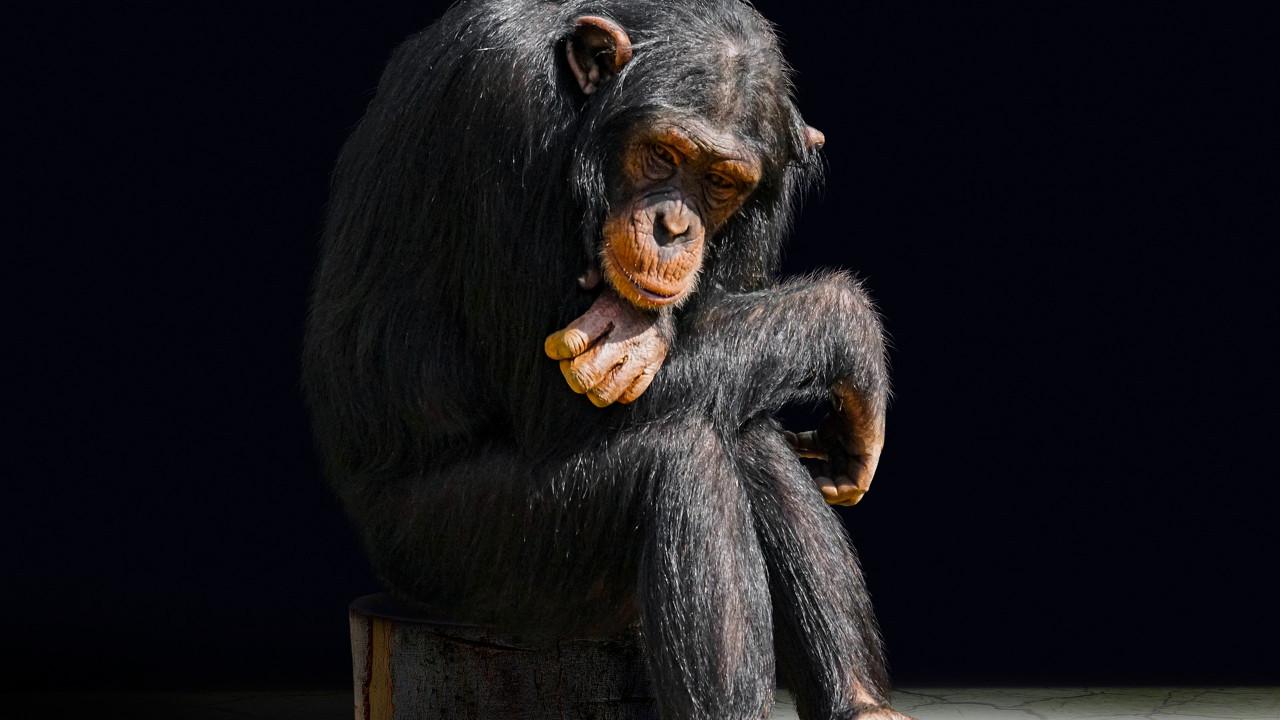 Bilim insanları insan-maymun melezi embriyo oluşturdu