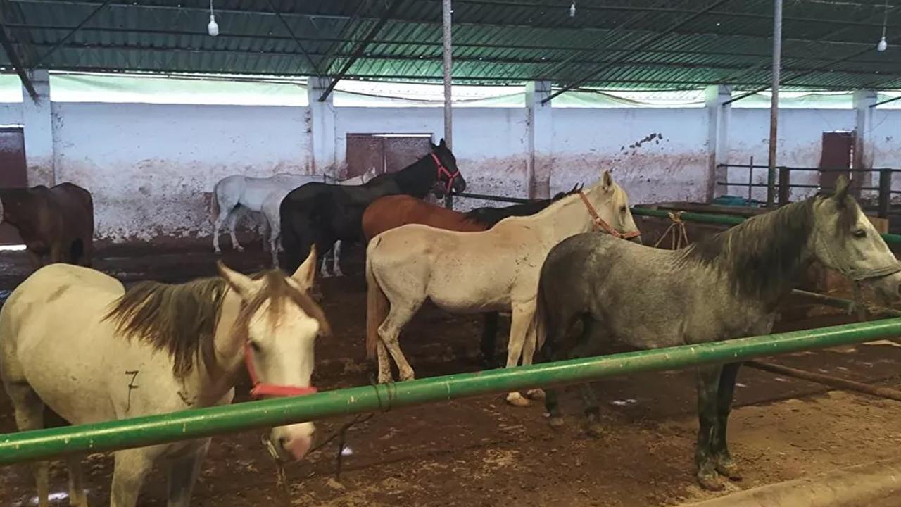 İBB'nin MHP'li belediyeye hibe ettiği 50 at kayboldu