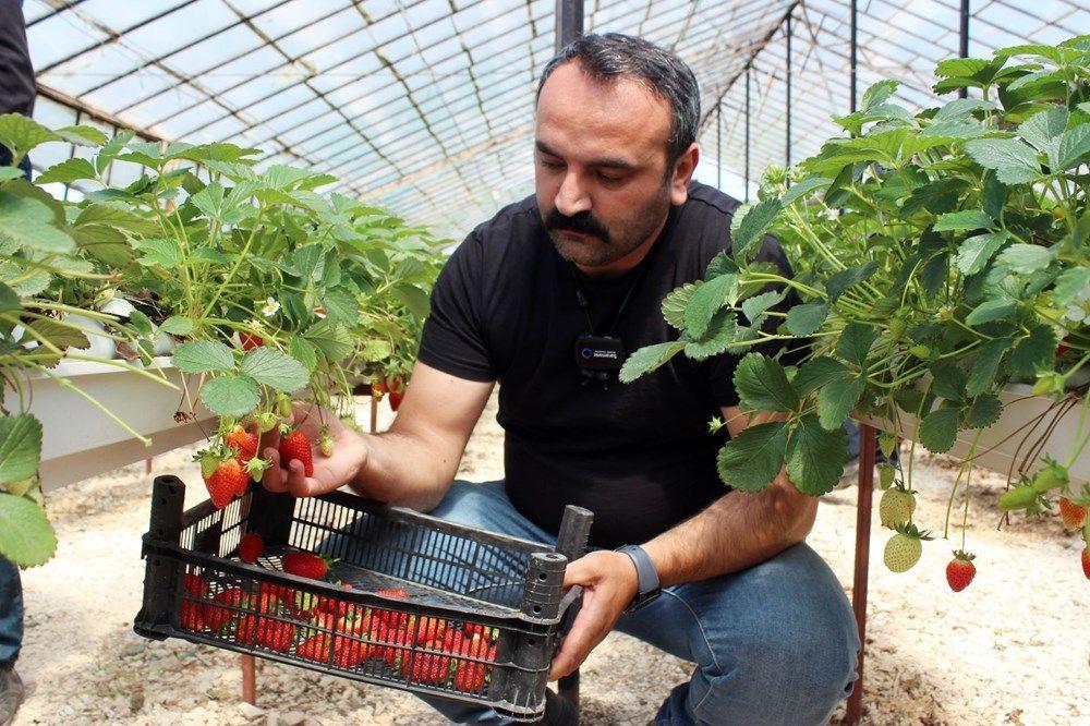 Topraksız tarımla yılda 300 bin lira kazanıyor - Resim: 3