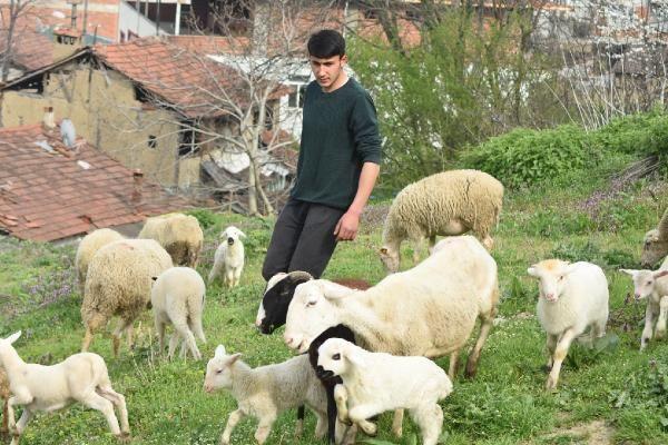 Çoban köpeği, kuzunun süt annesi oldu - Resim: 4