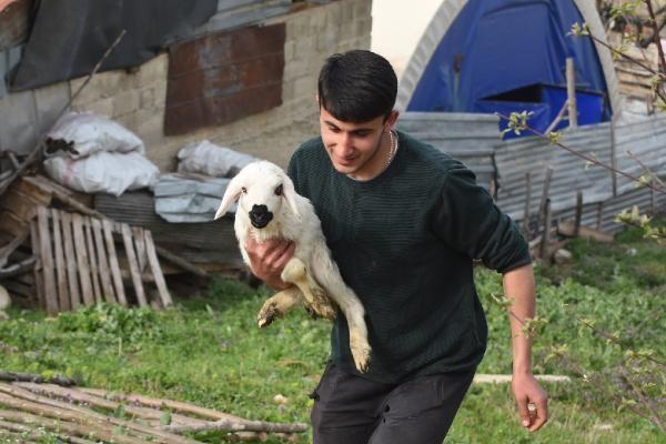 Çoban köpeği, kuzunun süt annesi oldu - Resim: 3