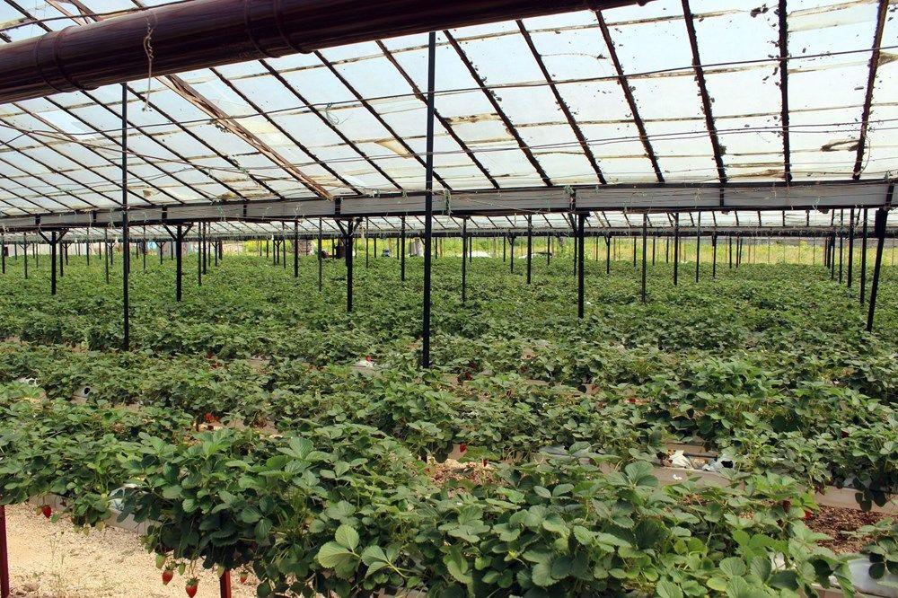 Topraksız tarımla yılda 300 bin lira kazanıyor - Resim: 2