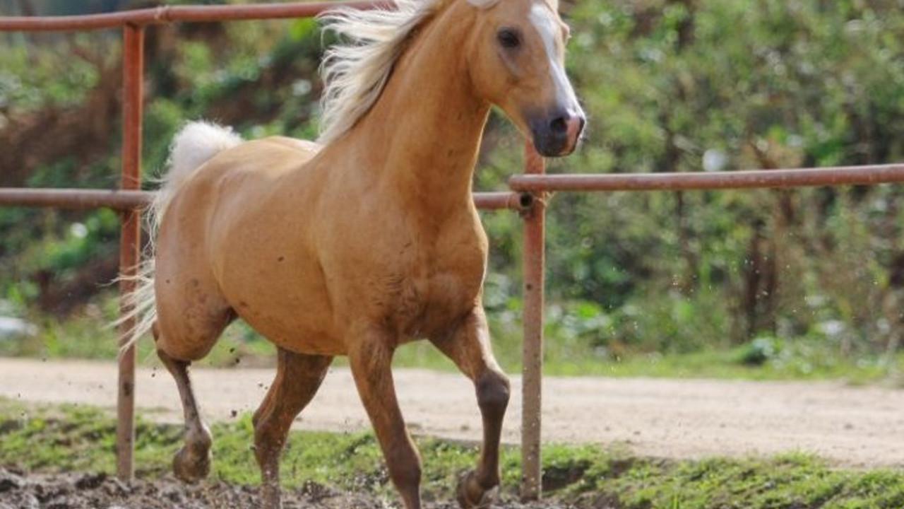 At skandalında yeni gelişme! 50 attan fazlası varmış